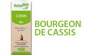 cassis2